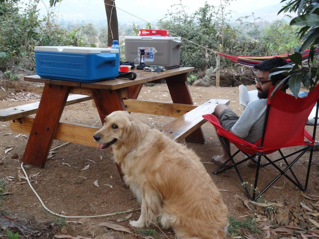 Camping with Pets 9