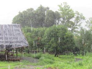 Monsoon Camping at Vasind 11