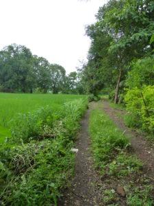 Monsoon Camping at Vasind 29